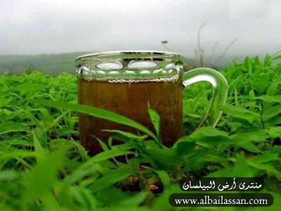 الشاي الأخضر للقضاء على رائحة الاحذية الكريهة Bilassan-a75d2ac8a6