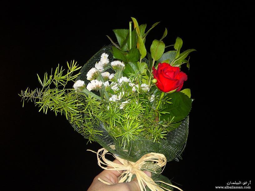 Ward elsham عيد ميلاد bilassan-ea08076556.